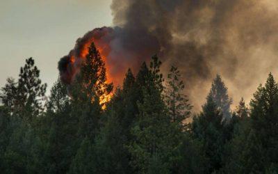 Gridding Forest Fires